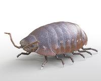 Pill Bug Armadillidiidae Rigged