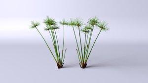 plant papyrus 3D model