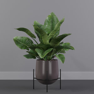 philodendron imperial green 01 3D