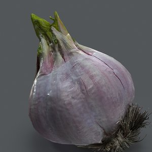garlic vegetable food model