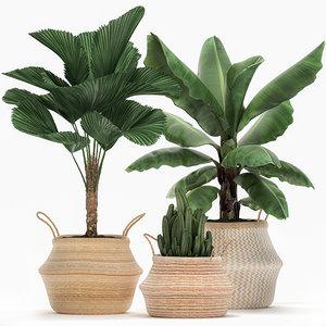 decorative plants interior 3D model