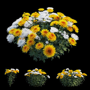 3D model chrysanthemum flower plant set