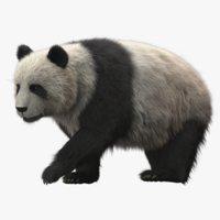 Giant Panda RIGGED