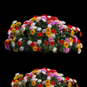 3D chrysanthemum flower plant set