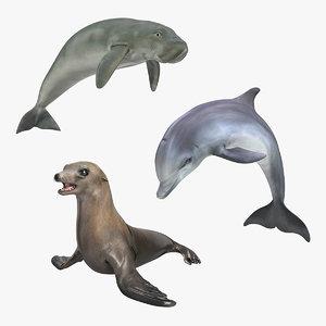 3D model marine mammals 2