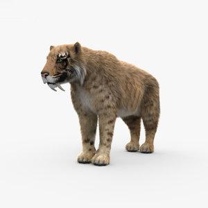 3D saber-toothed saber toothed model