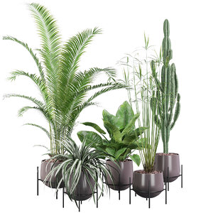 areca palm cyperus 3D model