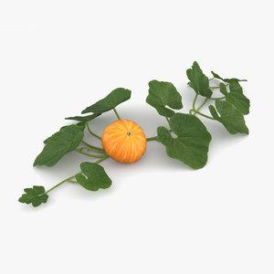 3D pumpkin plant model