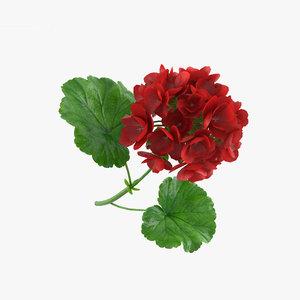 3D geranium flowers plant
