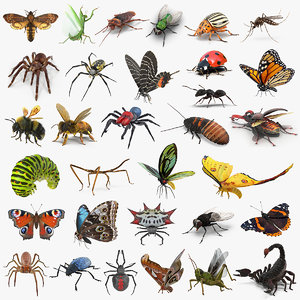 insects big rigged 4 3D model