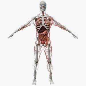 3D human internal model