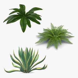 plants agave century 3D model