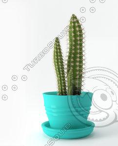 cactus cereus 3D model