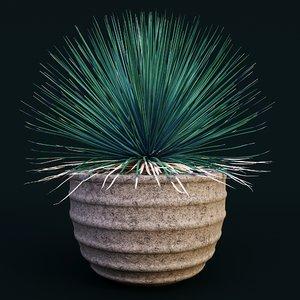 agave stricta 3D model