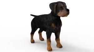 3D pup rottweiler