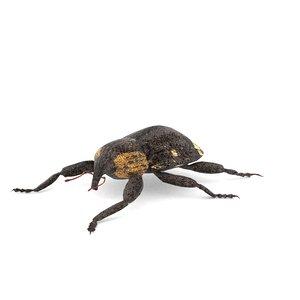 3D weevil beetle