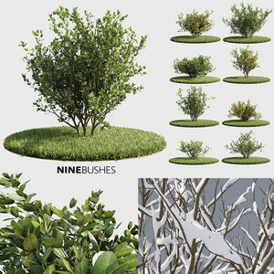 3d model bushes v-ray corona