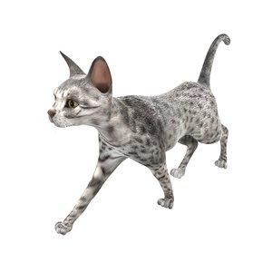 3D model cat pose