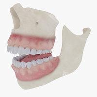 Teeth, Gums and Bones