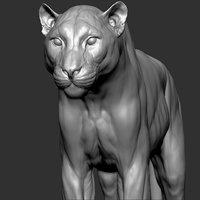 Leopard Panthera pardus  Realistic Zbrush Sculpt