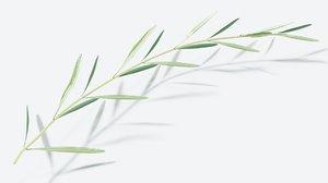 olive branch model