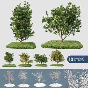 3d 10 broadleaf bushes model