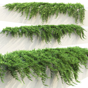 creeping juniper 3D model