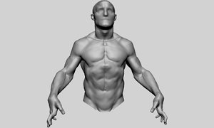 upper body sculpting anatomy model
