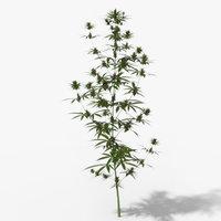 Cannabis Animated