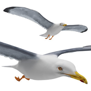 gull flying 3D model