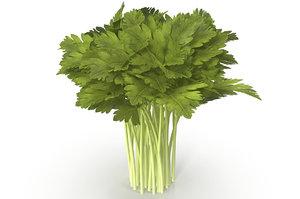 3D celery bunch model