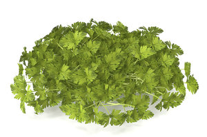 3D celery sprout salad