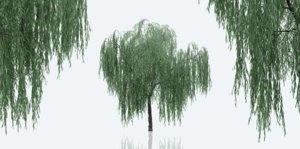 3D weeping willow trees nature
