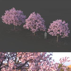 3D tree sakura