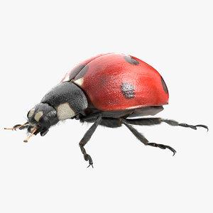 3D ladybug lady bug