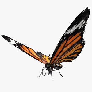 butterfly bug fly 3D model