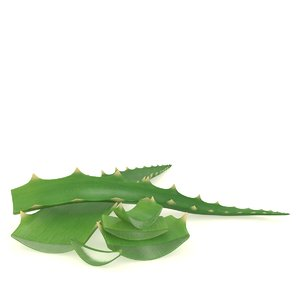 aloe plant vera 3D model