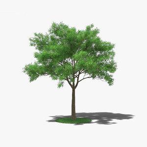 japanese pagoda tree 3D model