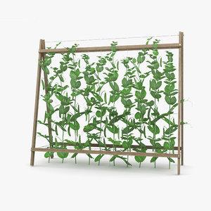 3D pea plant