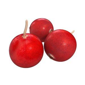 berry fruit 3D model