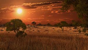 savannah savanna model