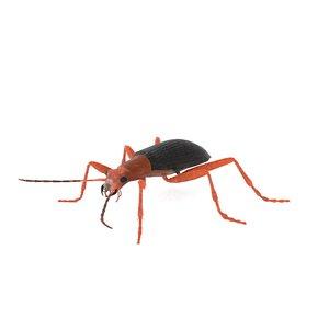 bombardier beetle 3D model