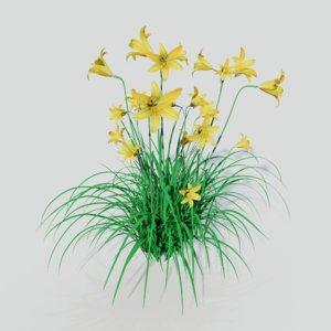 hemerocallis lilioasphodelus plants 3D model
