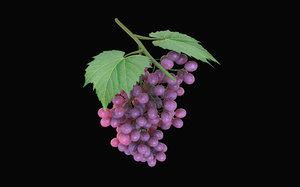 3D fruits grapes model