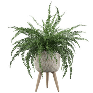 3D fern indoor plant
