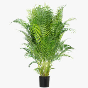 photorealistic palm realistic 3D