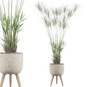 3D model cyperus nofretete 01