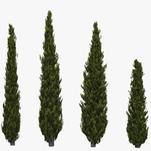 3d model of italian cypress trees