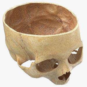 3D model human skull cranial 02