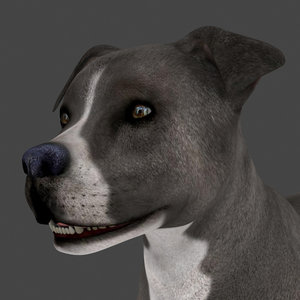 3D dog rigged